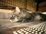 Il gatto e' mistero by Ariel87
