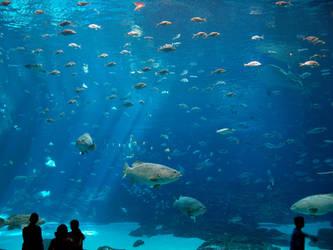 Georgia Aquarium 6 by Dracoart-Stock
