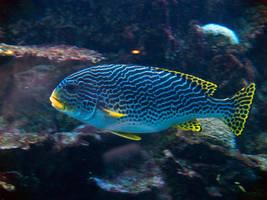 Georgia Aquarium 16 by Dracoart-Stock