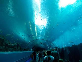 Georgia Aquarium 24 by Dracoart-Stock