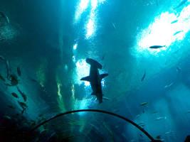 Georgia Aquarium 25 by Dracoart-Stock