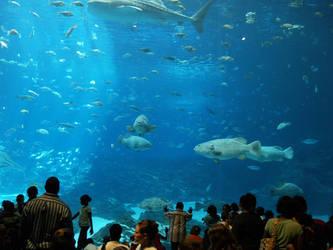 Georgia Aquarium 26 by Dracoart-Stock