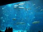 Georgia Aquarium 30 by Dracoart-Stock