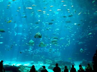 Georgia Aquarium 43 by Dracoart-Stock