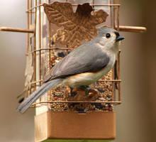 Bird 1 by Dracoart-Stock