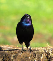 Bird 17 by Dracoart-Stock