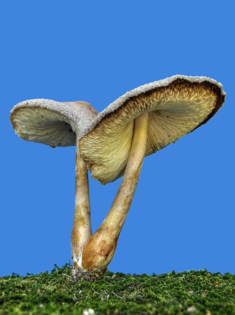 More Mushrooms 4 by Dracoart-Stock