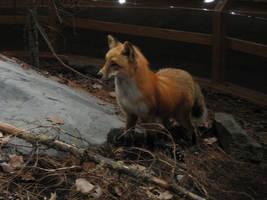 Fox by Dracoart-Stock