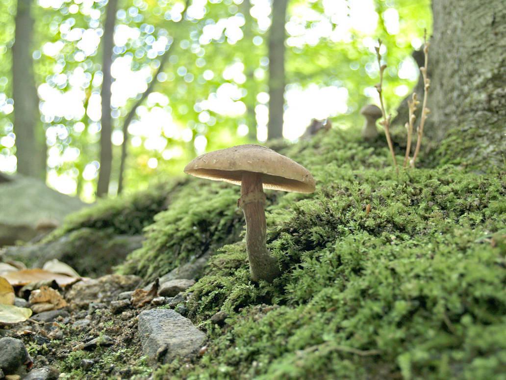 Mushrooms 13 by Dracoart-Stock