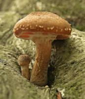 Mushrooms 19 by Dracoart-Stock