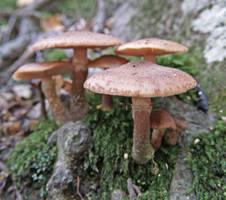 Mushrooms 25 by Dracoart-Stock