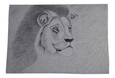 Lion the king, my drawing. by vish26385