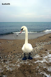 Swan by k-a-d-a-t-h