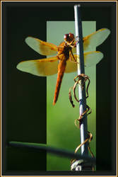 great wings framed by Cmac13