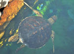 Sea Turtle by whytheface92