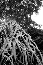 roots by Corrupted-Sanity