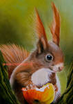Drawing Squirrel with pastel by mo62