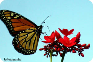 Fly Me Away by katara764