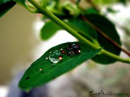 .WaterDrops. by yamixhikari