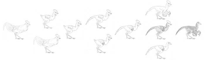 Evolution of Dino-Chicken by Schatten-Drache