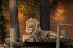 lion king by anarita82
