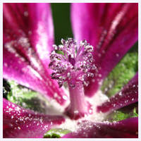 Flower Fireworks by Lonnieatk