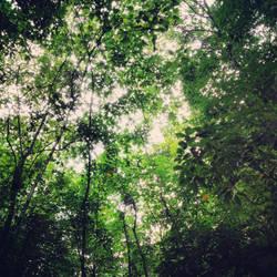 Jungle Dream by Clair3Su3