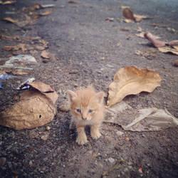 Hello Kitty by Clair3Su3