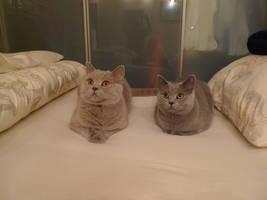 Two beautiful cats by Jadziana