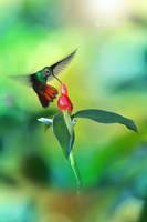 Hummingbird the 2nd by RadekDemjan