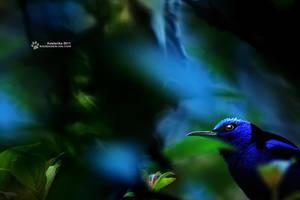 Blue world by RadekDemjan