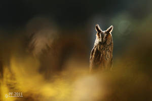 Moonlighting... by RadekDemjan