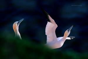 I belive... I can fly! by RadekDemjan