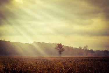 Shine by AnthonyPresley