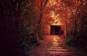 The Shed in the Woods by AnthonyPresley