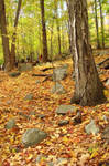 fall trail by Designdivala