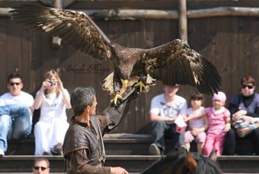 Steller's Sea Eagle I by MorganeS-Photographe