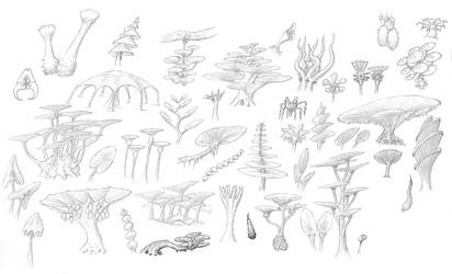 Parasol plants (better scan) by Ramul