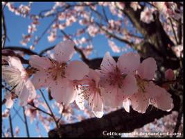 Flower 60 by CelticAngel84