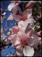 Flower 61 by CelticAngel84