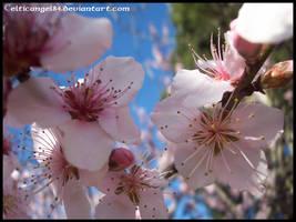 flower 63 by CelticAngel84