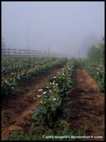 Foggy Morning by CelticAngel84