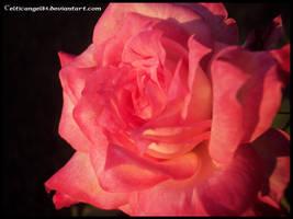 flower 65 by CelticAngel84
