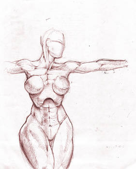 anatomy female musculature by Kaneandjake