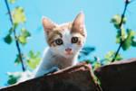 Cat by blacktomb