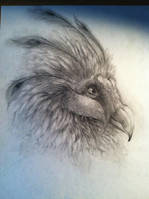 Bearded Peacock Vulture by kyrisnowpaw