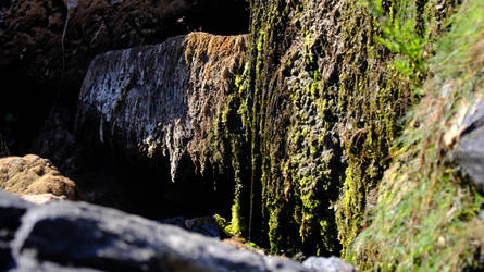Creeping Moss. by xJobO-De-HobOx
