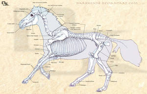 Horse Skeletal Structure by DarkKenjie