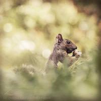A squirrel's dream by zvaella