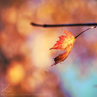 fall.in.colors.II by zvaella